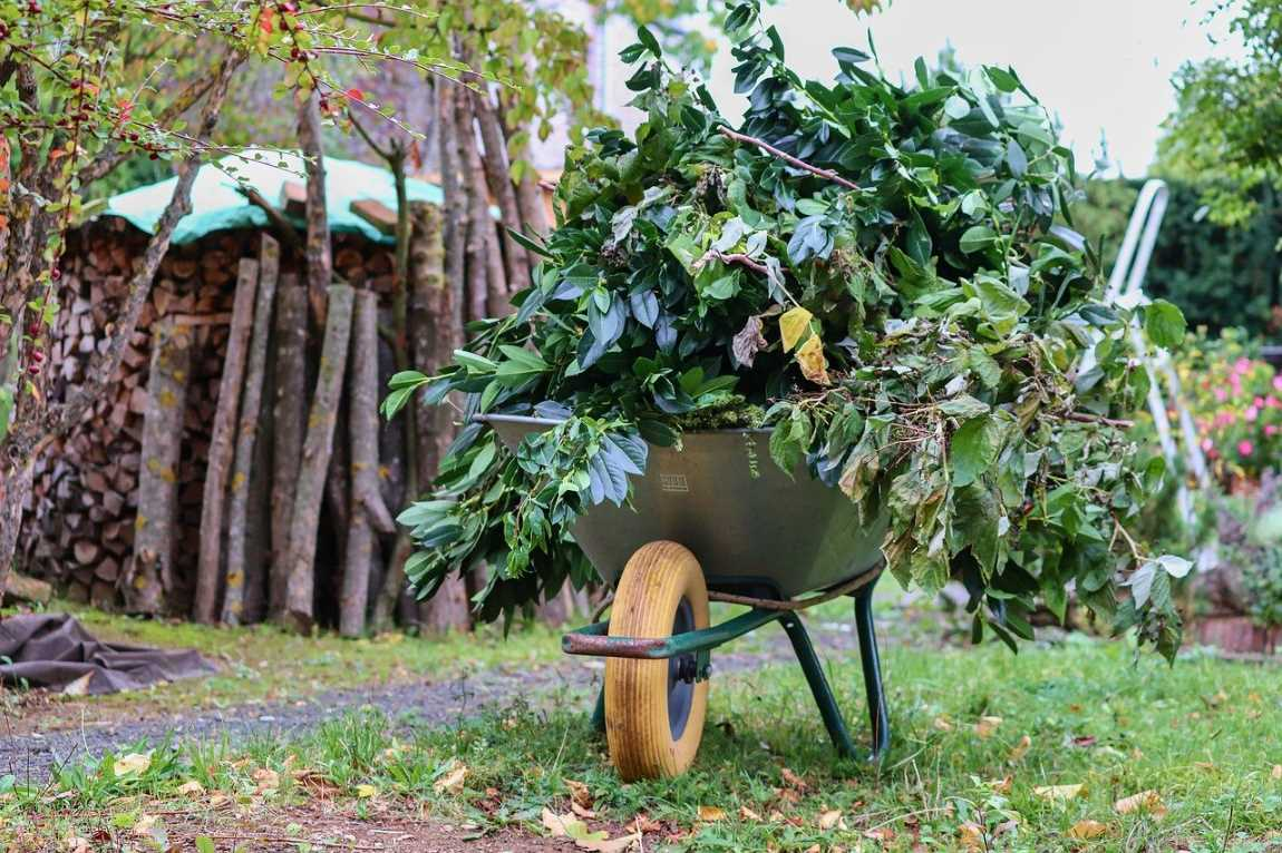 Using Organic Fertilizers For Your Trees