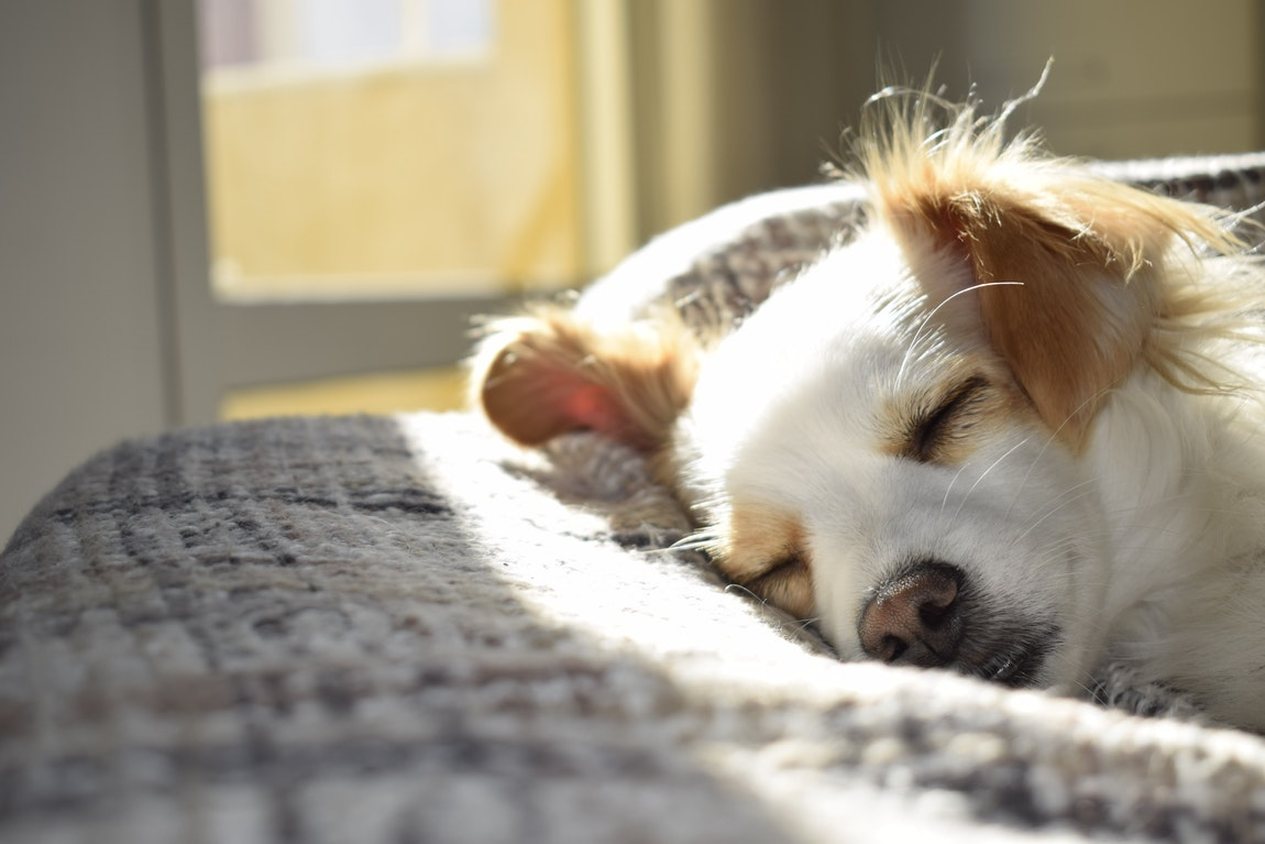 Reasons To Prevent And Treat Early Onset Of Ticks And Fleas In Dogs